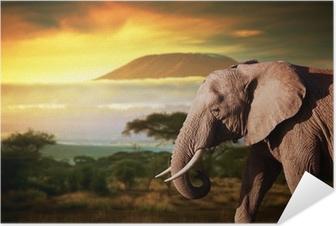 Självhäftande Poster Elefant på savannen. Mount Kilimanjaro vid solnedgången. Safari