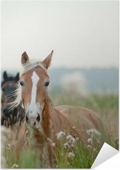 Självhäftande Poster Hästar i fältet