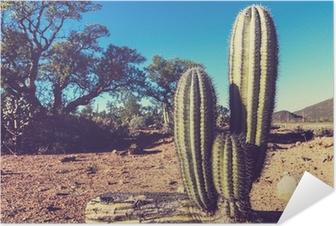 Självhäftande Poster Kaktus i Mexiko