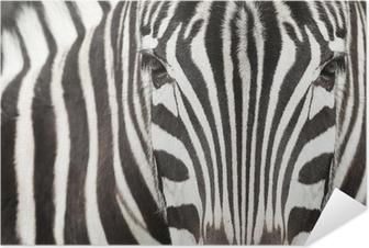 Självhäftande Poster Närbild av zebra huvud och kropp med vackra randigt mönster
