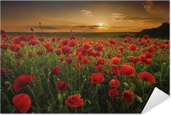 Självhäftande Poster Vallmofält vid solnedgången