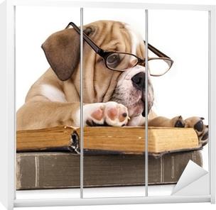 Skåpdekor Renrasiga engelska Bulldog i glasögon och bok