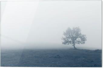Skleněný obraz Osamělý strom s mlhou