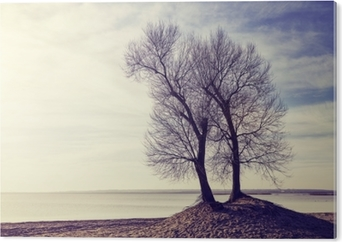 Stampa su Alluminio (Dibond) Gli alberi gemellati su una sponda del fiume al tramonto, colora l'immagine modificata.