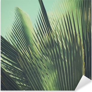 Abstract tropical vintage background. Palm leaves in sunlight. Pixerstick Sticker