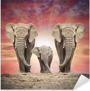 African elephant family on the road. Pixerstick Sticker