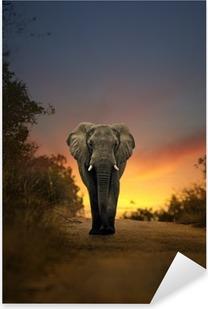Pixerstick Sticker Afrikaanse olifant lopen in zonsondergang