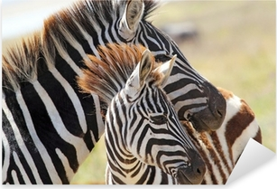 Baby zebra with mother Pixerstick Sticker
