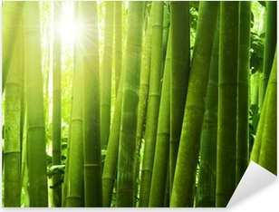 Bamboo forest. Pixerstick Sticker