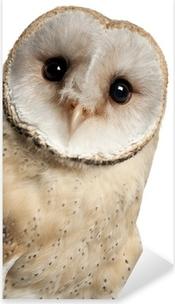 Barn Owl, Tyto alba, 4 months old Pixerstick Sticker