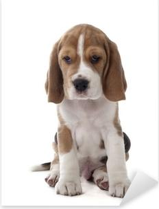 Pixerstick Sticker Beagle puppy