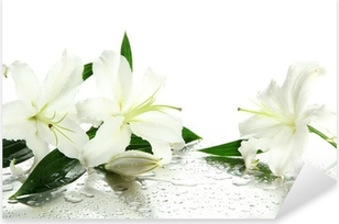 Sticker Pixerstick Beautiful Lily isolé sur fond blanc