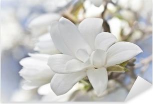 Beautiful magnolia blossom Pixerstick Sticker