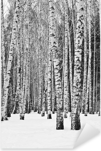 Birch forest in winter in black and white Pixerstick Sticker