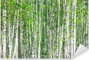 Birch forest. May Pixerstick Sticker