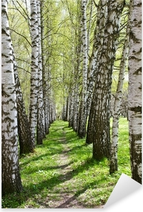 Birch-tree alley Pixerstick Sticker