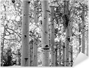 black and white image of aspen trees Pixerstick Sticker