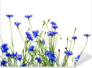 Pixerstick Sticker Blauwe korenbloemen
