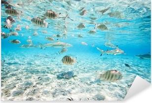 Bora Bora underwater Pixerstick Sticker