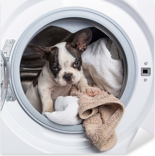 Sticker Pixerstick Bouledogue français chiot à l'intérieur de la machine à laver