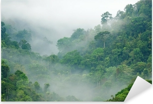 Sticker Pixerstick Brume matinale dans la forêt tropicale