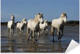 Sticker Pixerstick Camargue cheval blanc