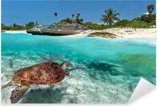 Caribbean Sea scenery with green turtle in Mexico Pixerstick Sticker
