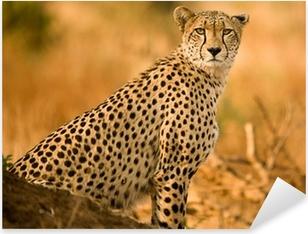 Cheetah Pixerstick Sticker