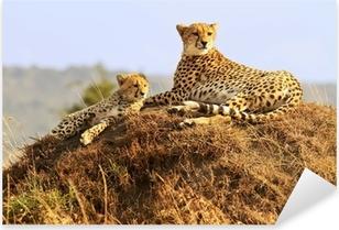 Pixerstick Sticker Cheetahs op de Masai Mara in Afrika
