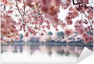 Cherry Blossoms over Tidal Basin in Washington DC Pixerstick Sticker