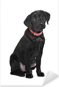 Sticker Pixerstick Chiot labrador noir