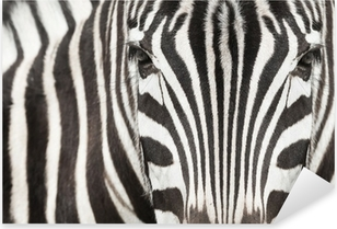 Close-up of zebra head and body with beautiful striped pattern Pixerstick Sticker