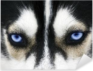Close up on blue eyes of a dog Pixerstick Sticker
