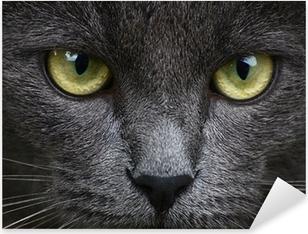 Close up portrait of grey kitten Pixerstick Sticker