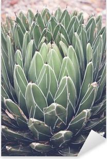 Pixerstick Sticker Close-up van agave vetplant, selectieve aandacht, toning