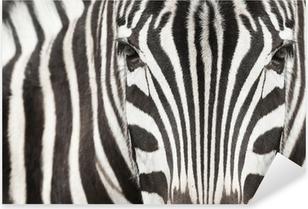 Pixerstick Sticker Close-up van zebra hoofd en lichaam met mooie gestreepte patroon