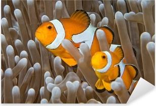 Pixerstick Sticker Clown vis, terwijl op zoek naar jou van anemoon