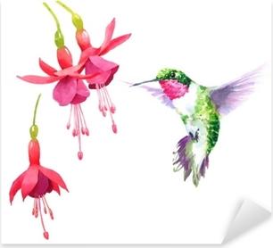 Sticker Pixerstick Colibri oiseau aquarelle battant autour de la fuchsia fleurs dessinés à la main été jardin illustration jeu isolé sur fond blanc