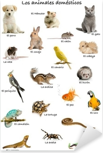 Collage of pets and animals in Spanish Pixerstick Sticker