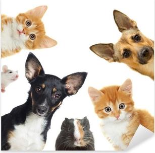 Pixerstick Sticker Collection huisdieren