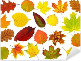 Colorful autumn leaves isolated on white Pixerstick Sticker
