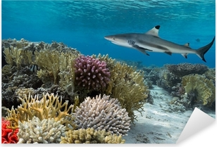 Colorful underwater coral reef with yellow stripped fish and big Pixerstick Sticker
