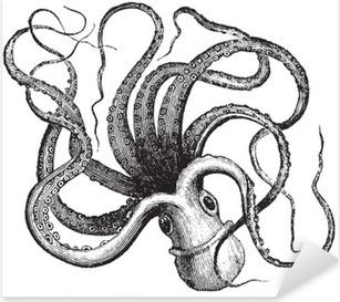 Common octopus (Octopus vulgaris), vintage engraving. Pixerstick Sticker