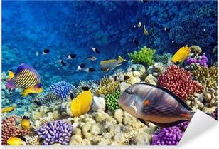 Sticker Pixerstick Corail et poisson rouge dans le Sea.Egypt