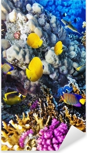 Coral and fish in the Red Sea. Egypt Pixerstick Sticker