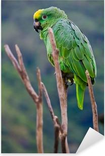 Sticker Pixerstick Costa rica perroquet vert