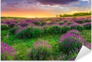 Sticker Pixerstick Coucher de soleil sur un champ de lavande en été en Tihany, Hongrie