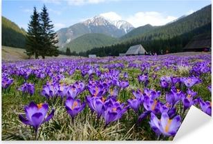 Sticker Pixerstick Crocus dans Chocholowska vallée, les montagnes des Tatras, en Pologne