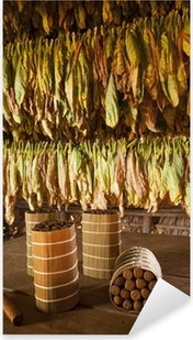 Cuban cigars in drying house Pixerstick Sticker