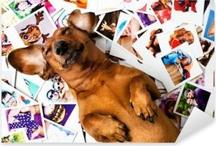 Cute dog among the photos Pixerstick Sticker